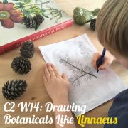 Linnaeus lesson plan