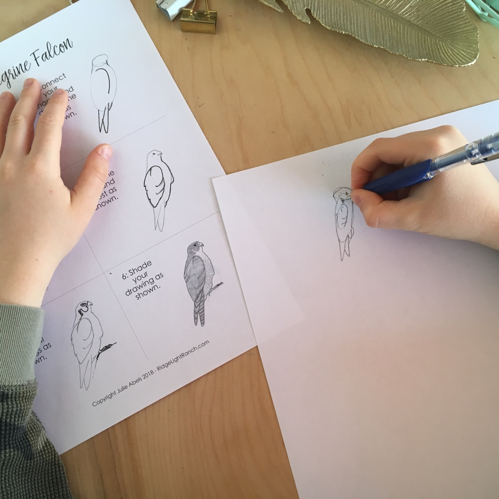 how to draw a falcon for kids
